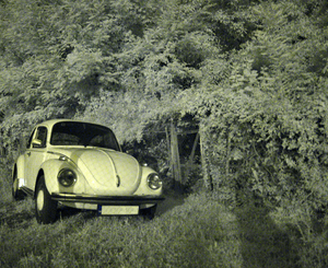 An infrared beetle