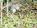 Inquisitive Squirrel (enhanced).jpg