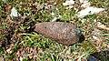 Insolite, obus de mortier non explosé au Vallonnet, Parc de la Vanoise (2).jpg