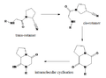 Intramolecular cyclisation of the cis-rotamer.png