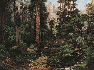 In the Sassafras Valley, Victoria