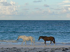 Harbour Island, Bahamas - Image: Islandhorses