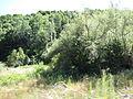 Izvorska reka 06.JPG