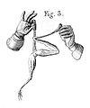 J. Aldini, galvanism Wellcome L0001964.jpg
