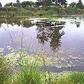 JAPANESE GARDEN POND - panoramio.jpg