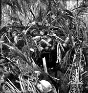 Japanese bunker in Buna area, Papua, New Guinea