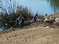 Jerusalem Biblical Zoo057.jpg