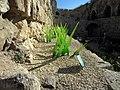 Jerusalem Glass grass stereo I (6036383576).jpg