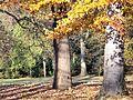 Jesiennie... - panoramio (3).jpg