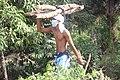 Jeune transportant des fagot de boie 25.jpg
