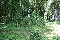 Jewish cemetery in Uhříněves 35.JPG