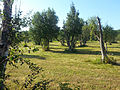 Jungfruskär Pargas meadows 1.jpg