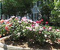 Junior House Rose Garden.jpg