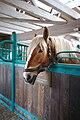 Jutlandic horse in a stable.jpg