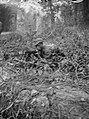 KNIL militair in verdekte opstelling met karabijn, Bestanddeelnr 8200.jpg