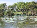 Kakadu National Park (2052486280).jpg