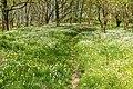 Kalletal - 2015-05-02 - LIP-032 Abgrabung Stemmen (13).jpg