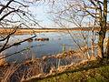 Kalmthoutse Heide (64).JPG