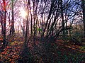 Kapellen-freudenberg-l418-weg-wuppertal-tobefree-20151127-115814-02.jpg
