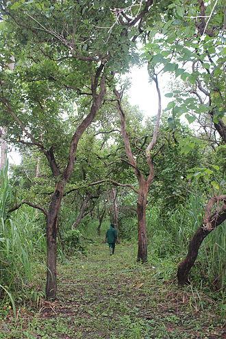 Outamba-Kilimi National Park - Karangia (Hill of Learning in Susu) Trail in Outamba-Kilimi National Park, Sierra Leone.