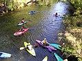 Kayaking in Collie, Western Australia.jpg