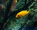 Kemah Goldfish (5858618746).jpg