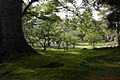 Kenrokuenparkkanazawa moss.JPG