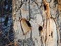 Kerry Wood Nature Conservatory (32856098981).jpg