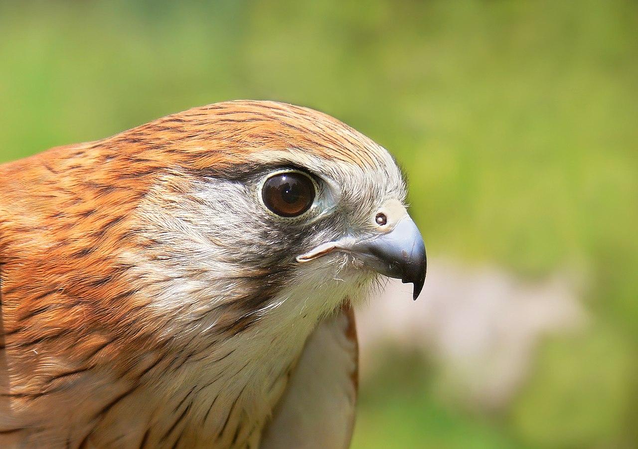 Anatomía de las aves - Wikiwand