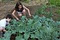 Kids harvesting kale.jpg