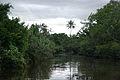 Klias Wetlands 04.jpg