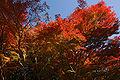 Kobe Suma Rikyu Park03n4592.jpg