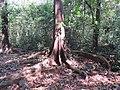 Kottiyoor reserve forest views - Aralam Butterfly Survey at Kottiyoor, 2019 (51).jpg