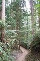 Koya Pilgrimage Routes(Nyonin-michi)15.jpg