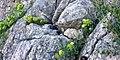 Krk- stijene pune života.jpg