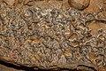 Kunak Sabah Mostyn-Cave-15.jpg