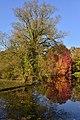 L'arbre pelé devant le feuillage rouge (22485020438).jpg