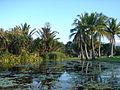 Lagoon area Townsville Palmetum.jpg