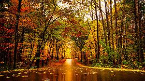 Lake Maria State Park - Lake Maria State Park in autumn