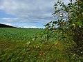 Landschaft zwischen Seesbach und Gonratherhof - panoramio (1).jpg