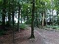 Landschaftsschutzgebiet Waldgebiete bei Dielingdorf und Handarpe LSG OS 00025 Datei 4.jpg