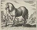 Landschap met paard uit Toscane. NL-HlmNHA 1477 53011496.JPG