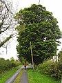 Lane and tree at Killaphort - geograph.org.uk - 1309771.jpg