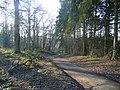 Lane through woodland - geograph.org.uk - 1115931.jpg