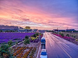 Lavender and afterglow in Zhangye