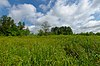 Lawin Sedge Meadow.jpg