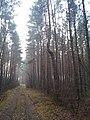 Leśna Droga - panoramio (1).jpg