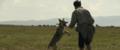 Le dernier loup - Les coulisses - les loups sur le tournage 4.png