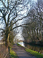 Leeds and Liverpool Canal trees 2008.jpg