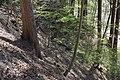 Leitenwälder der Isar 0604.jpg